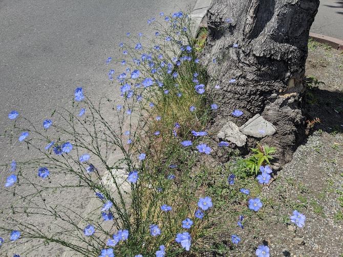 道路脇に咲く花
