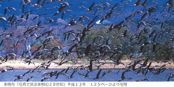 美唄に飛来するたくさんの渡り鳥