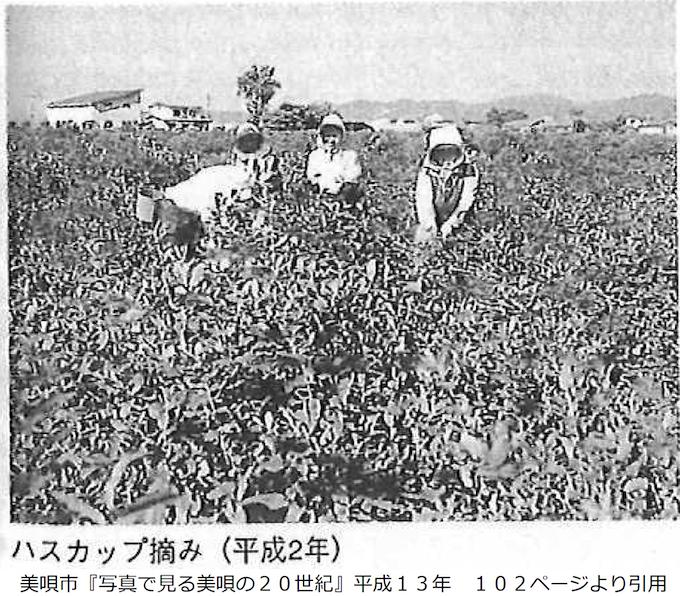 ハスカップの収穫