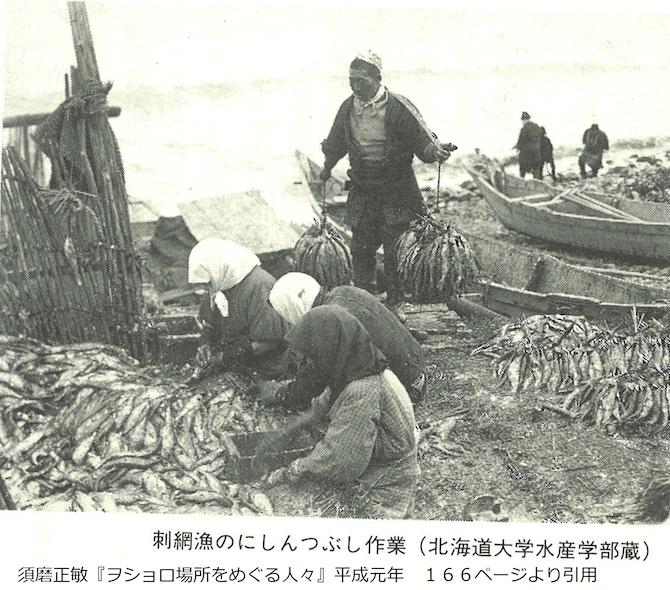 刺網漁のにしんつぶしの様子